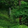 4484 Modern-Asian-Garden-Icon_v1