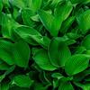4444 Life-Affirming-Green_v1