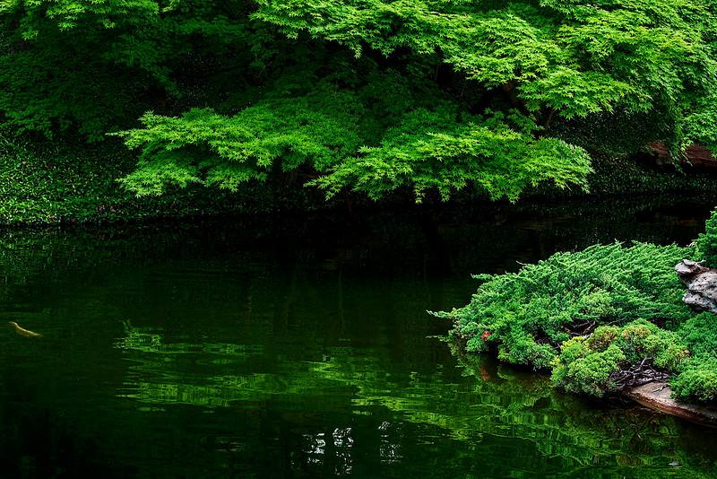 4419 koi-Pond-Shrouded-In-Shade-_v1