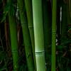 4382 Bamboo-Perfect#2_v1