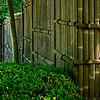4380 Bamboo-Fencline-_v1