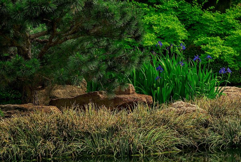 4465 Bonzai-Styled-Pine-And-Iris-_v1