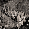 3521 Spring-Fern-and-Granite-monochrome-copy_v1 copy