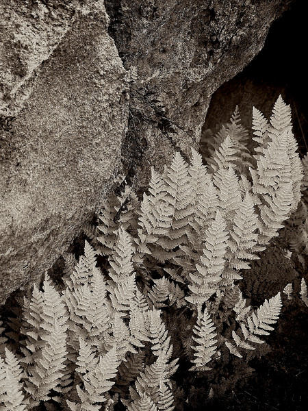 3510-Ferns-and-Granite-monochrome-_v1_v1 copy