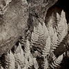 3510-Ferns-and-Granite-monochrome-_v1_v1 copy