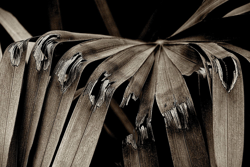 3200-Broken-Palm-Fronds_v2 copy