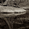 4206 Stump-Reflected-_v1 copy 2