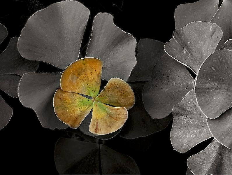 2554-Clover-In-Autumn-Duotone-_v1 copy