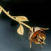 18kt gold rose forged lifesize