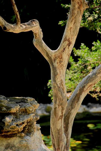 2716-Madrone-Tree-In-The--Garden_v1 copy