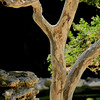 2716-Madrone-Tree-In-The--Garden_v1 copy