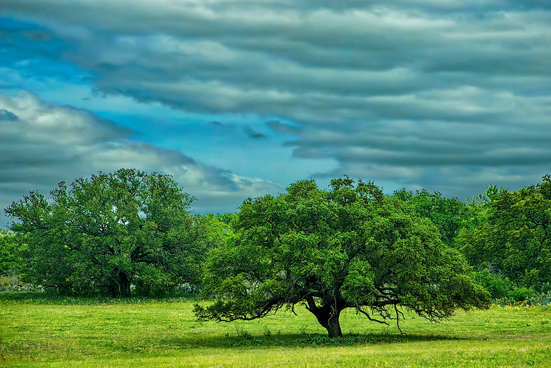 5131 Texas-Savannah_v1 copy