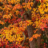 4598 Eastern-Hardwoods-Autumn-Display-_v1 copy