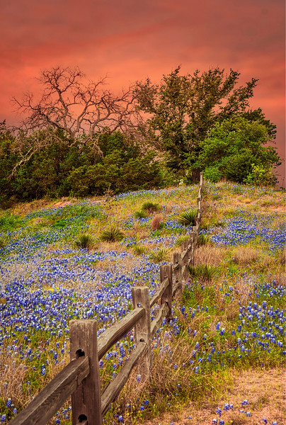 5100 Bluebonnet-Sunset_v1 copy