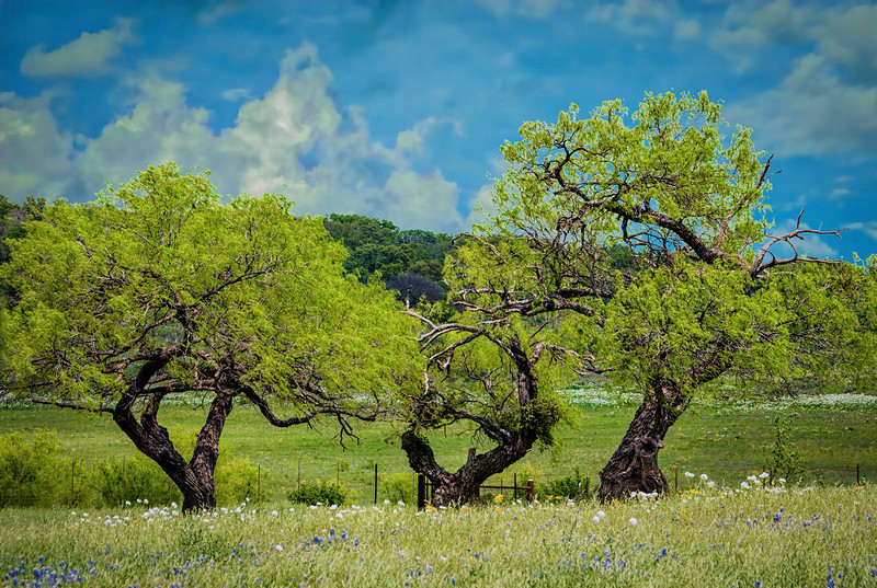 5112 Hill-Country-Spring-GreenSpring-Green_v1 copy