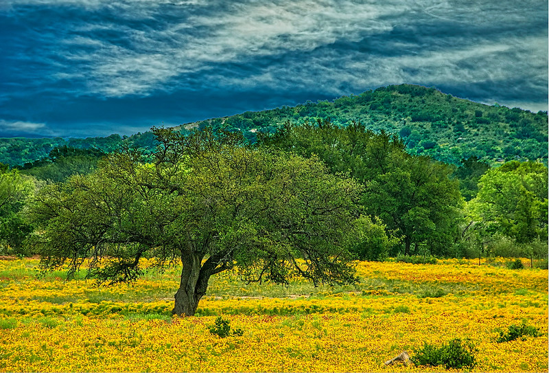 5153 Hill-Country-Meadow-In-Spring_v1 copy