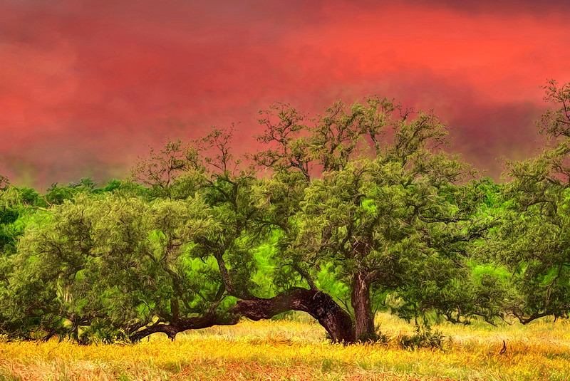 5009 Red-Sunset-And-Live-Oak_v1 copy
