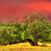5009 Red-Sunset-And-Live-Oak_v1 copy