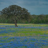 4259 Hill-Country-Pasture-And-Bluebonnets-_v1 copy