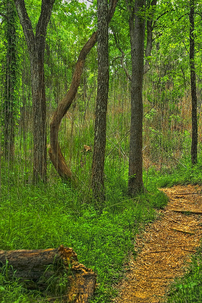 4896 Trees-And-Weeds-On-A-Path_v1 copy