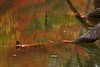 3623 Reflected-Color-In-A-Quiet-Stream-