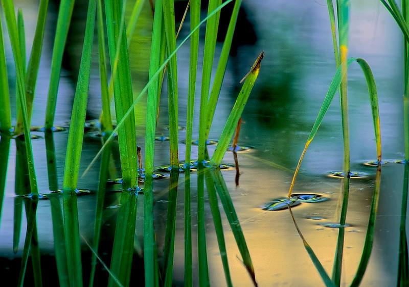 2925-Wetlands-Detail-_filtered_v1_v1_v1