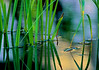 2925-Wetlands-Detail-_filtered_v1_v1_v1