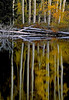 2302_aspen-reflections-filtered-copy_v1_v1