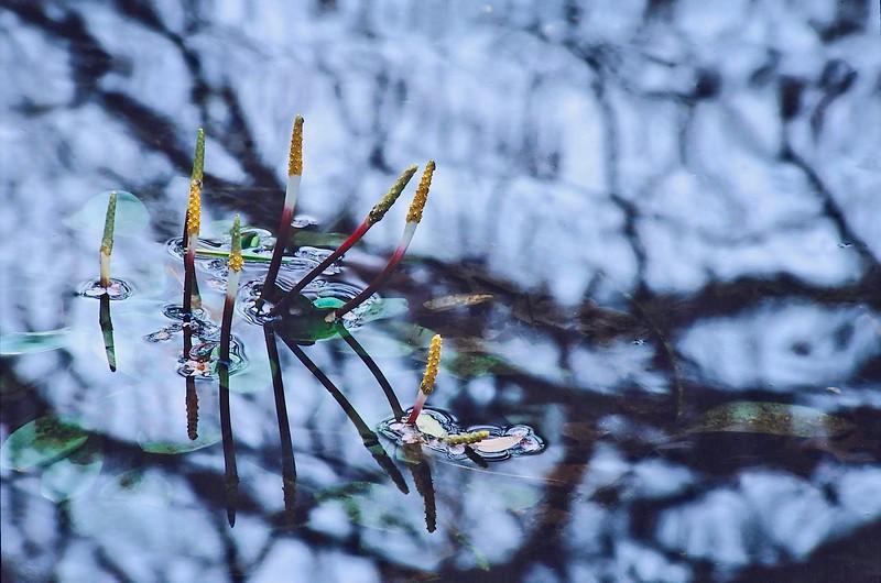 3367 Pond-Coming-Alive-