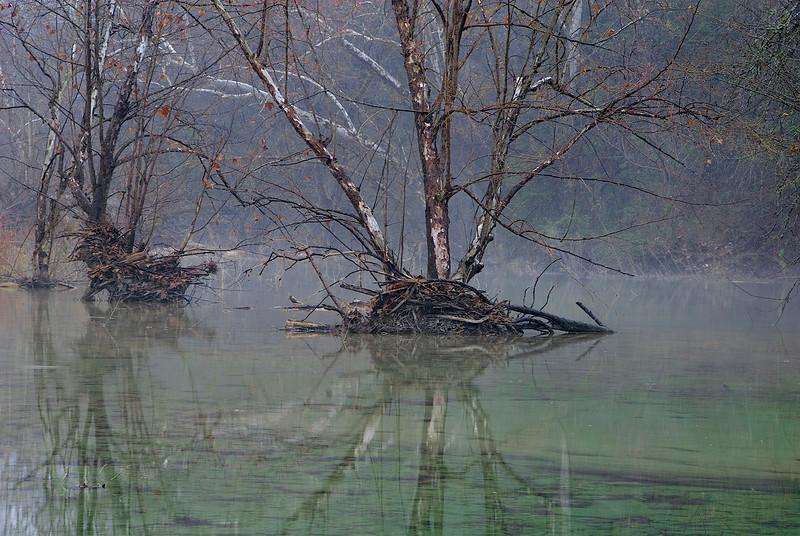 3156-Still-Morning-On-Bull-Creek-_v1