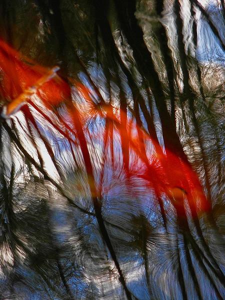 3545  Koi-Swimming-Through-Reeds-_v1