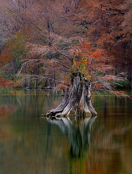 2354-Cyprus-Stump-In-Mid-Stream-_v2