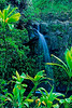 2924-Cascade-In-The-Tropics-_filtered_v1