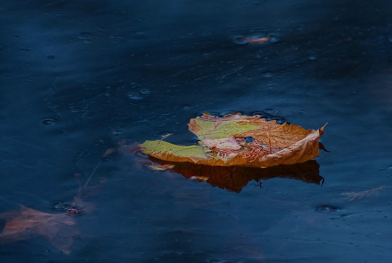 3609 Floating-Autumn-Island-_v1