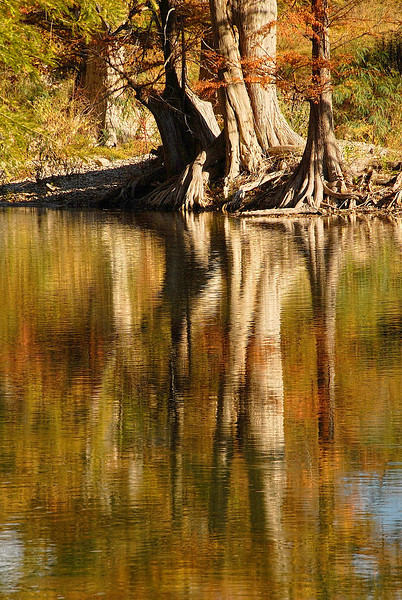 2738-Rooted-Reflections_v1