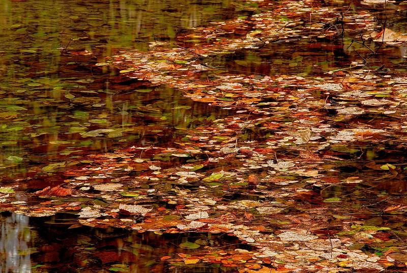 2762-Floating-In-Stream-Leaves-_v1