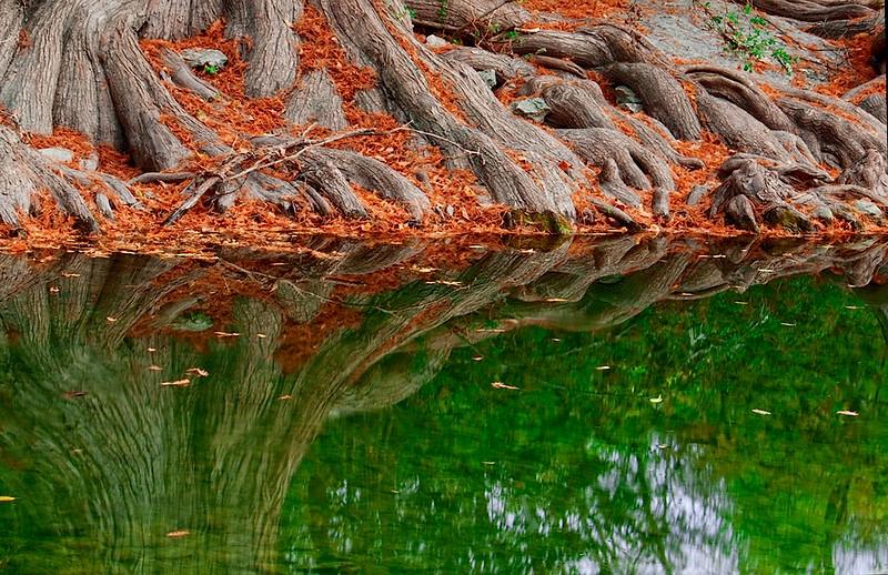 3541 Cyprus-Roots,Creekside-