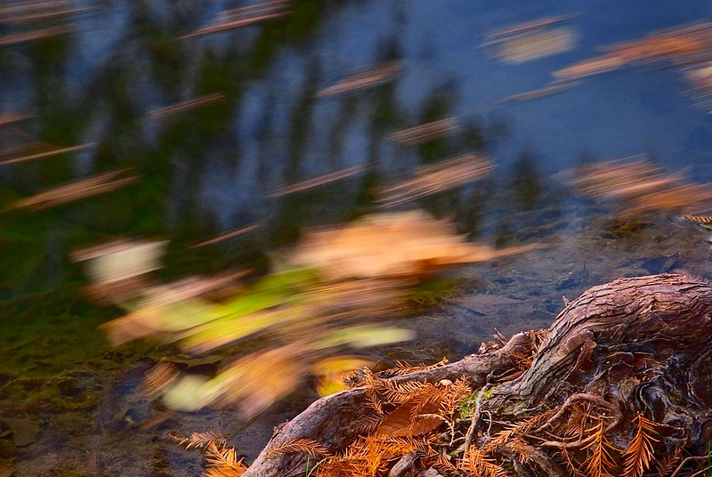 3559 Stream-In-Motion-,Floating-Leaves