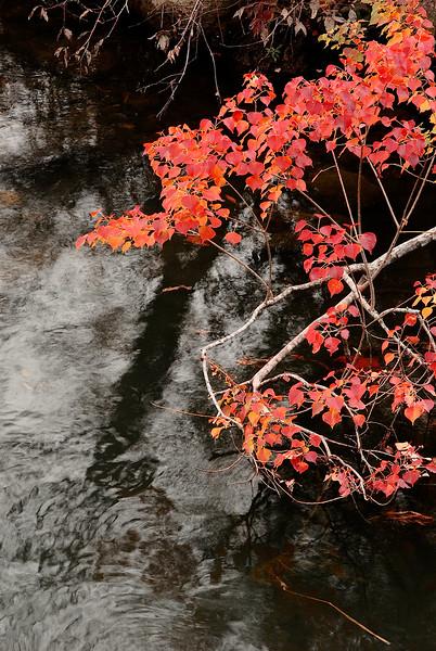 2731-Crimson-Foliage-Reflections-