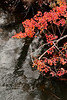 2731-Crimson-Foliage-Reflections-