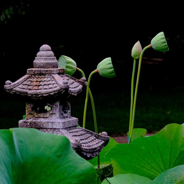 6614 Stone Lantern And Lotus Pods _v1 copy 2
