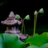 6614 Stone Lantern And Lotus Pods _v1 copy 2