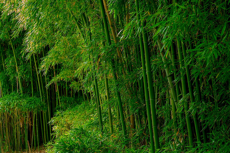 4369 Bamboo-grove-_v1 copy