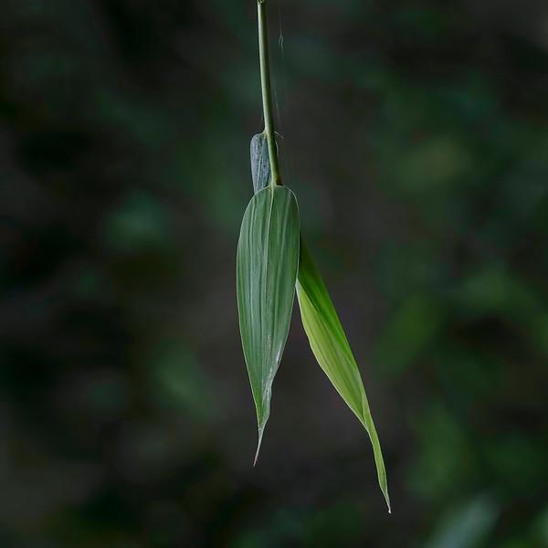 6482 Bamboo Leaves _v1 copy 2