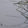 6468 Reflected Reeds _v1 copy 2