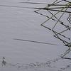 6468 Reflected Reeds _v1 copy 2