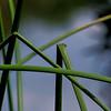 6611 Bent Reeds _v1 copy 2