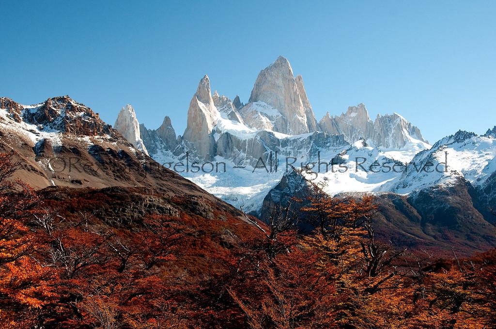 Autumn foliage in Los Glaciares National Park.  Argentine Patagonia.