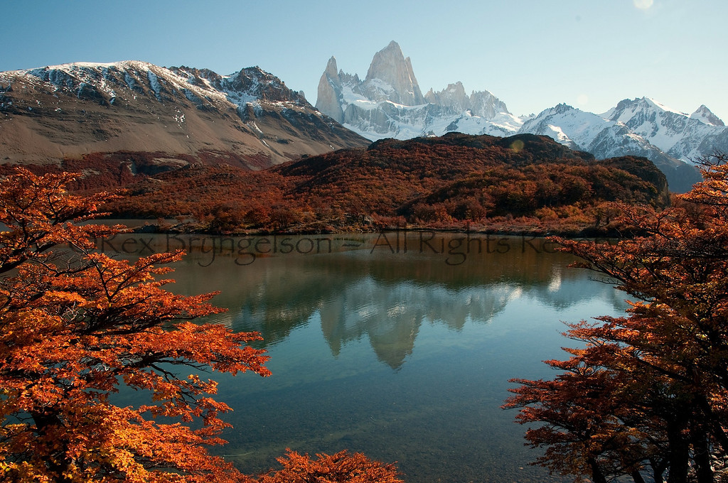 Autumn foliage in Los Glaciares National Park.  Argentine Patagonia.
