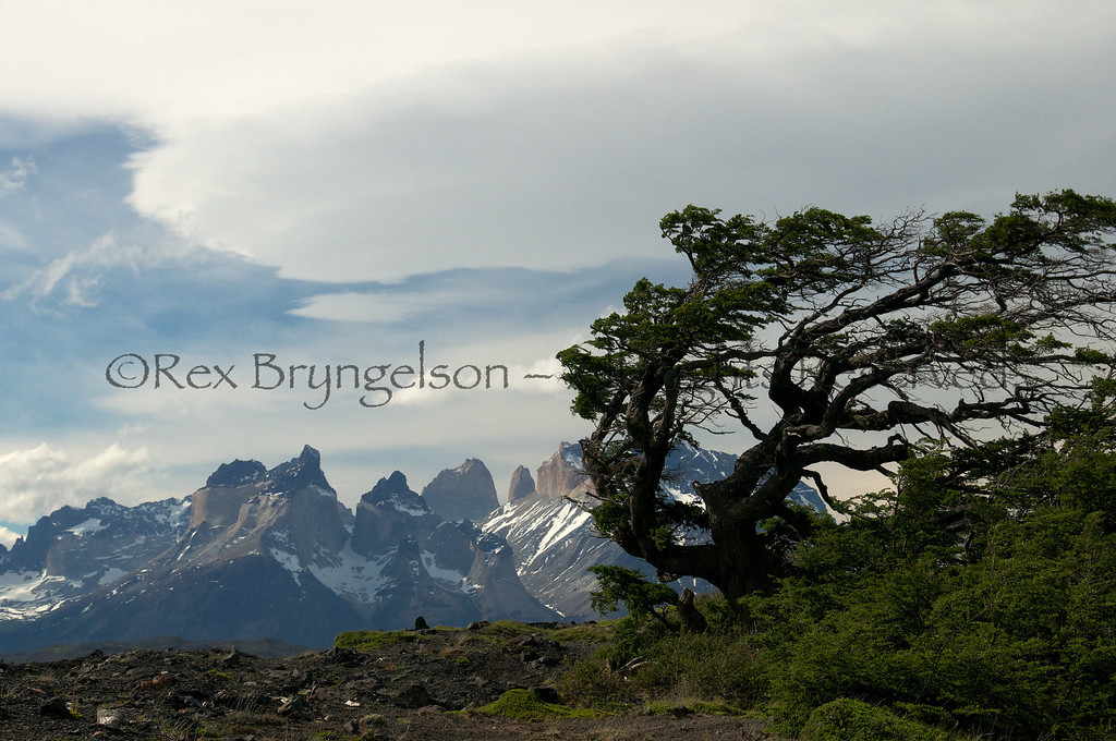 A flag tree and the Paine massif